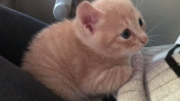 ひのき猫さんのプロフィール