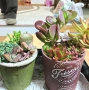 かわいい植物と動物たち