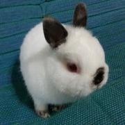 あわてんぼウサギと暮らす生活