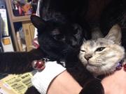 むぎちゃん猫リンパ腫闘病記