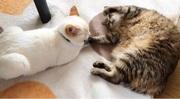 君たちのおかげ〜6匹の猫とベビーの物語〜
