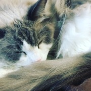 『ハクとリリス』で猫日和