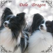 犬用品ABCDog店長のブログ
