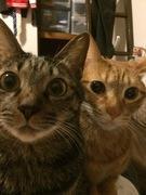 猫は三年の恩を三日で忘れない