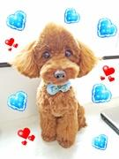 犬ブログ du トイトイぷうぅ