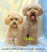 Teddy&Claraの軽キャン生活