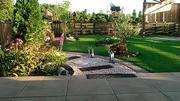 メダカと緑の庭