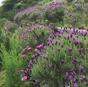 心と身体を整えるために in Herbal Life