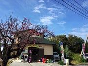 沖縄ぬちぐすい畑