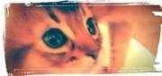 Cattery PUKU−CHIQ