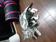 気ままな猫とお洒落魔女