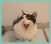 化け猫ゼロと、双極?おかん