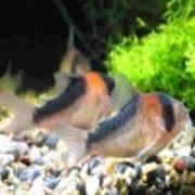 熱帯魚Aquarium楽々水槽管理