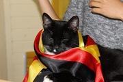 黒猫ローキーとのドイツ生活