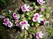 花と草花探しの福岡巡り散歩