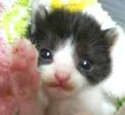 ねこてん〜全ての猫は天使である〜