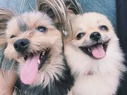 Kabo & Loro | 駒沢・駒沢公園周辺で愛犬とのんびり
