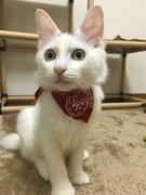 猫フォト コレクション