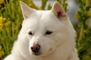 北海道犬と歩む人生