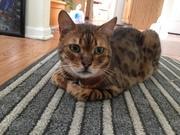 ウチの猫はバイリンガル
