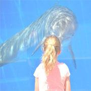 光の家族 チャネリング 海の生命体が伝える地球と宇宙