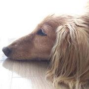 横浜から楽天イーグルスを応援するブログ