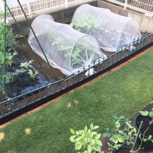 家庭菜園と暮らしと わたし