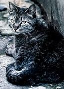 野良猫生活〜うつと障害年金と生活保護