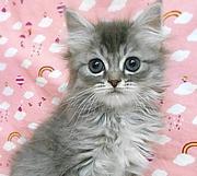 東京のシェアハウスで猫と暮らそ♪ 猫ネコねこ7匹と同居中&無農薬バラ栽培