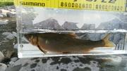 2流釣り師のブログ