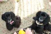 双子のアメコカセイラとミライ