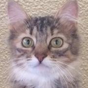 保護猫まりさんのプロフィール