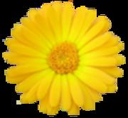 「枯れない花の庭で」