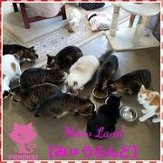 北海道小樽の猫cafe「みゃうらんど」とミニマリスト