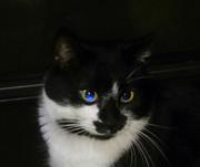 野良猫モドキ草吉のブログ