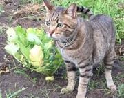 ずぼら主婦の家庭菜園ブログ