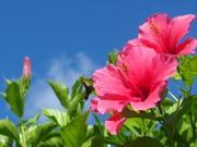 沖縄 奄美大島 南の島の旅ブログ