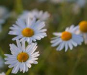 白い花が咲いてる丘