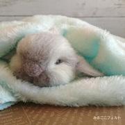 みるここフェルト の 羊毛フェルト教室 大阪