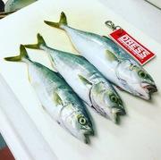 瀬戸内釣り日記。in兵庫