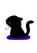 ノラ猫暮らしのまめちしき