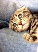 自称猫ブログ 〜猫23匹と英語とGenkiのブログ 〜