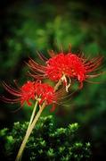 花と自然に癒されて