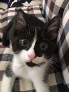 愛犬・愛猫日記ブログ