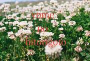 natsuyomeさんのプロフィール
