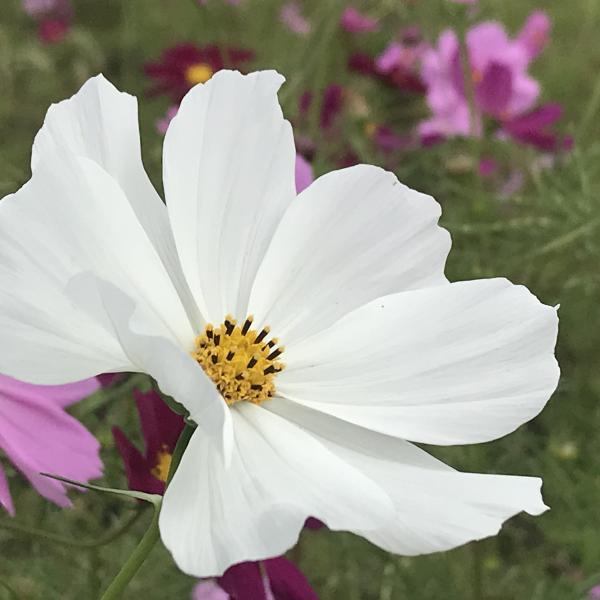 花の縁結び
