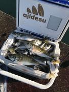 学生の房総釣り日記