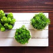草冠 ーほっとできる時間を、植物と。ー
