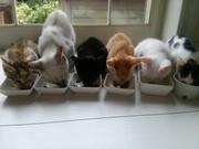 3度のご飯より猫が好き♪