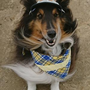 愛犬シェルティと幸せクレバー生活